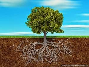 deeply-rooted-in-Christ-Optimized-Optimized
